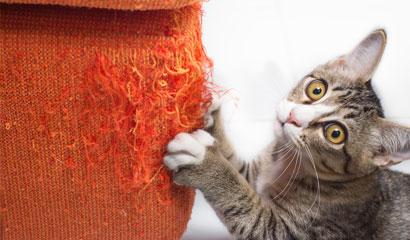 la malattia da graffio del gatto